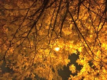 with a brooklyn streetlight moon