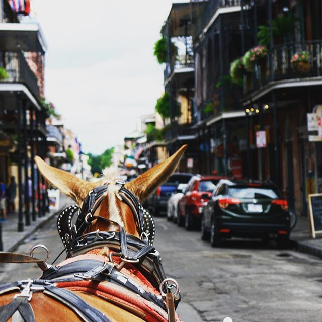 Carriage rides in the French quarter is a must! 👈 _ _ _ _ _ _ _ _ _ _ _ _ _ #instatravel #trip #beautiful #travelgram #instapassport #instago #flashesofdelight #mytinyatlas #unlimitedparadise #dametraveler #tourist #outdoors #explore #life #vacation #instagood #igtravel #holiday #vacationwolf #passionpassport #mobilephotography #shotoniphone #neverstopexploring #liveauthentic #hsdailyfeature #lifeofadventure #pro_ig #watchthisinstagood #travel #explore #bestplacestogo