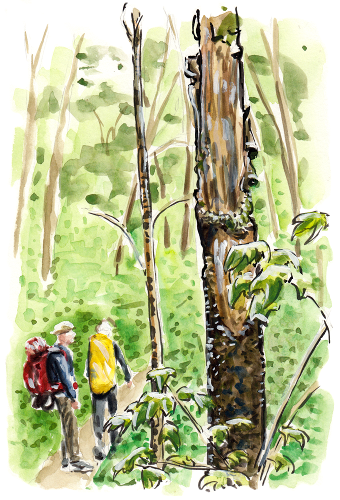 Walking the green forest