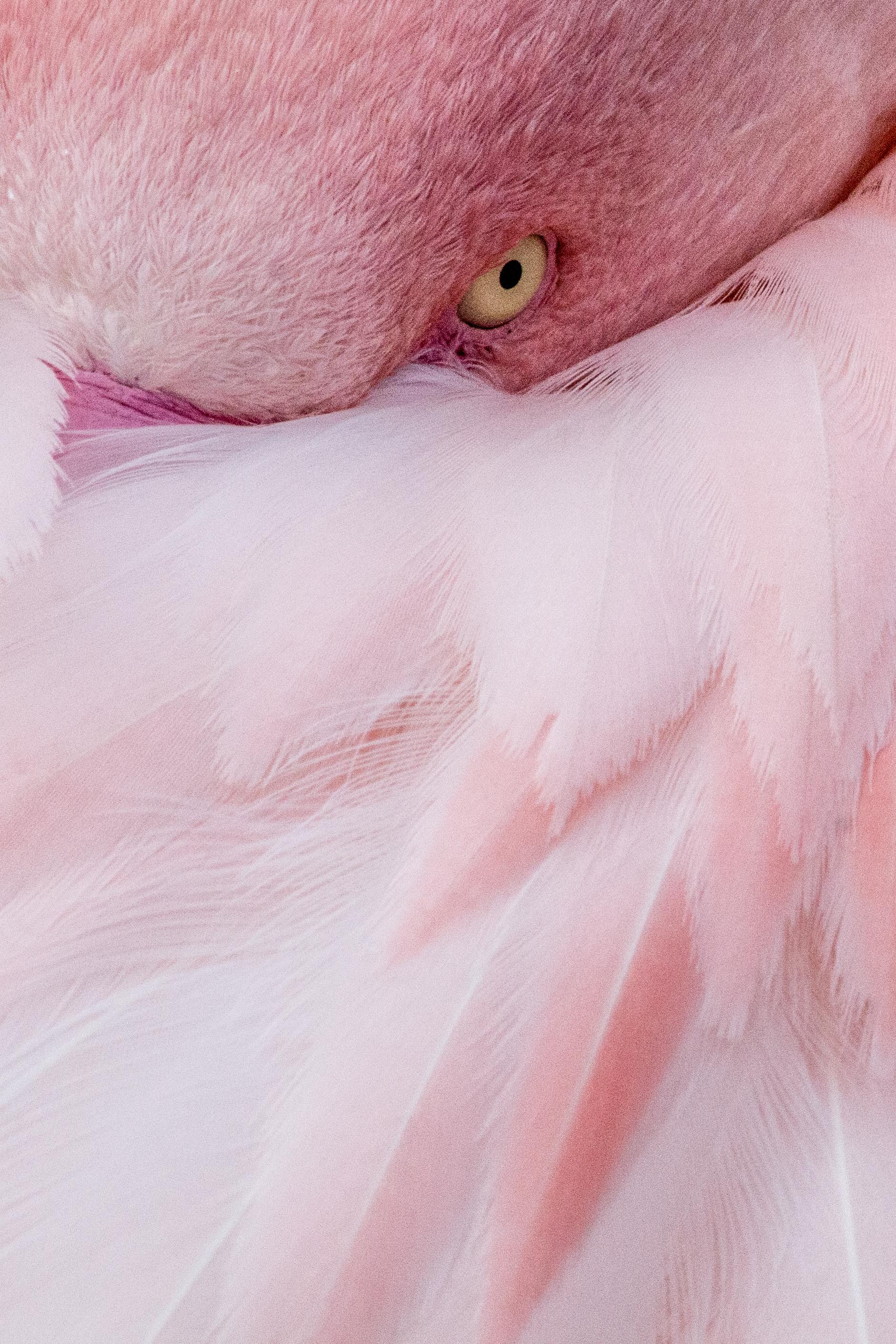 Flamingo   EOS 70D - F/22 - 1/250 Sek - ISO 800 - 270mm