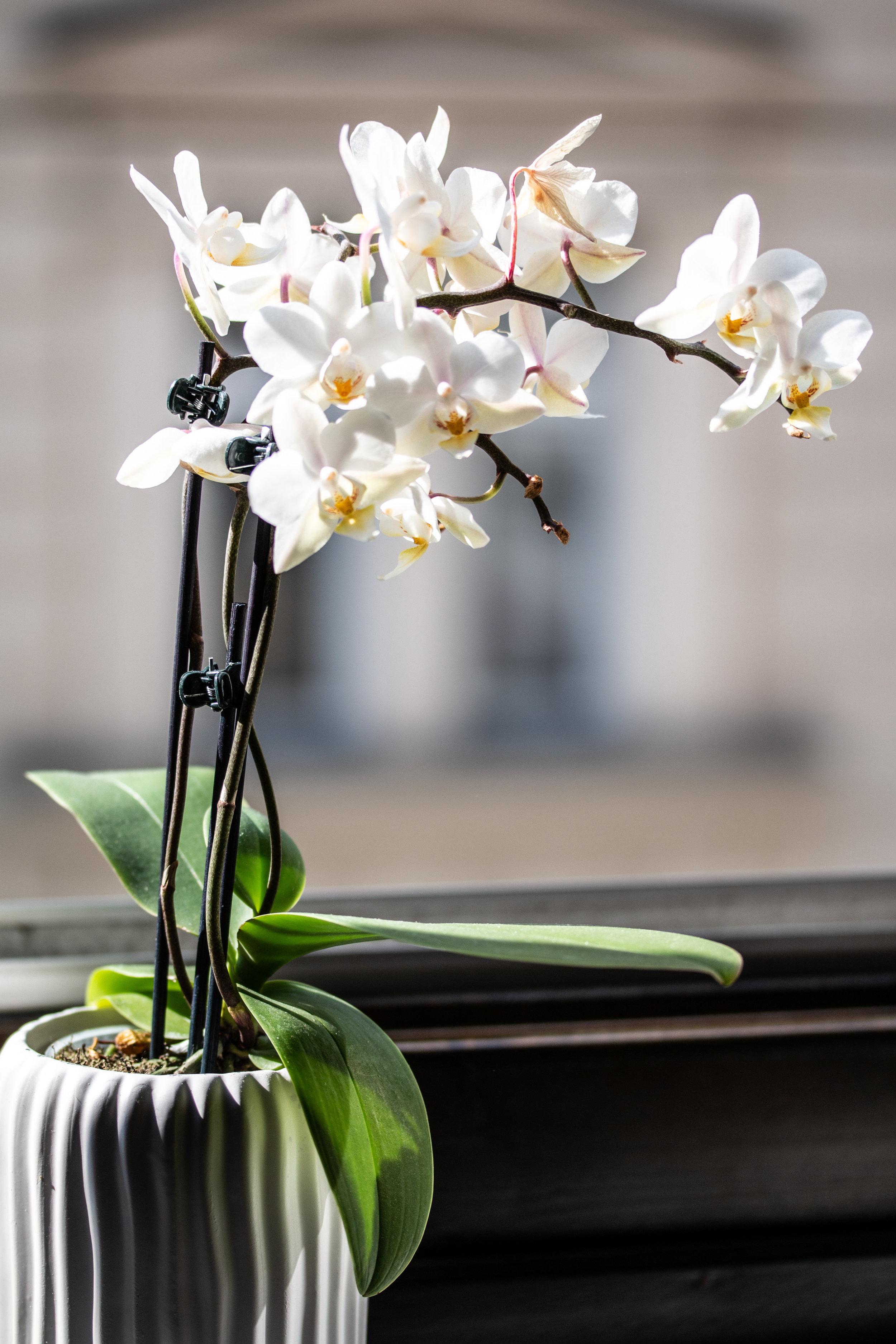 20180528_0001_Orchidee.jpg