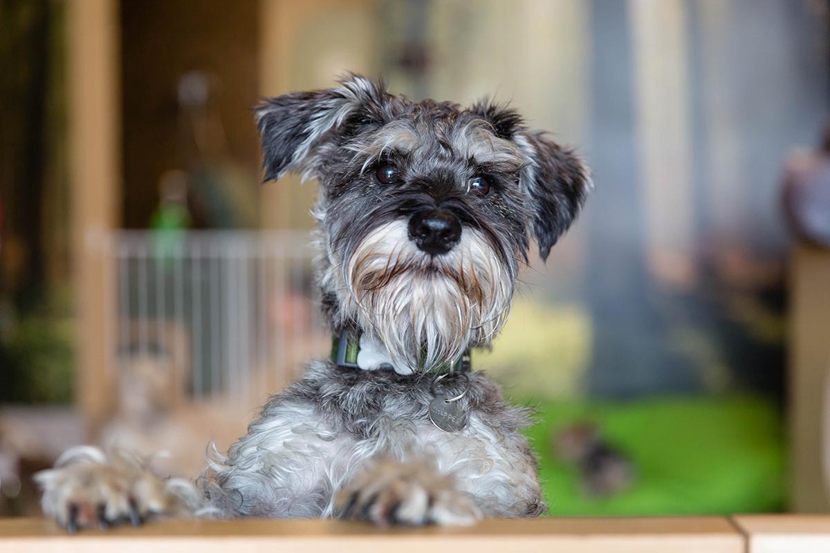 Surrey Dog Photographer | Sniffles Dog Grooming Spa