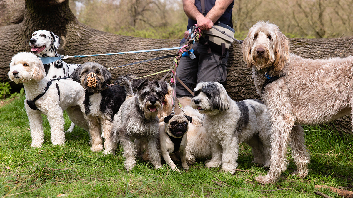 Richmond Dog Photographer | Hampstead Heath