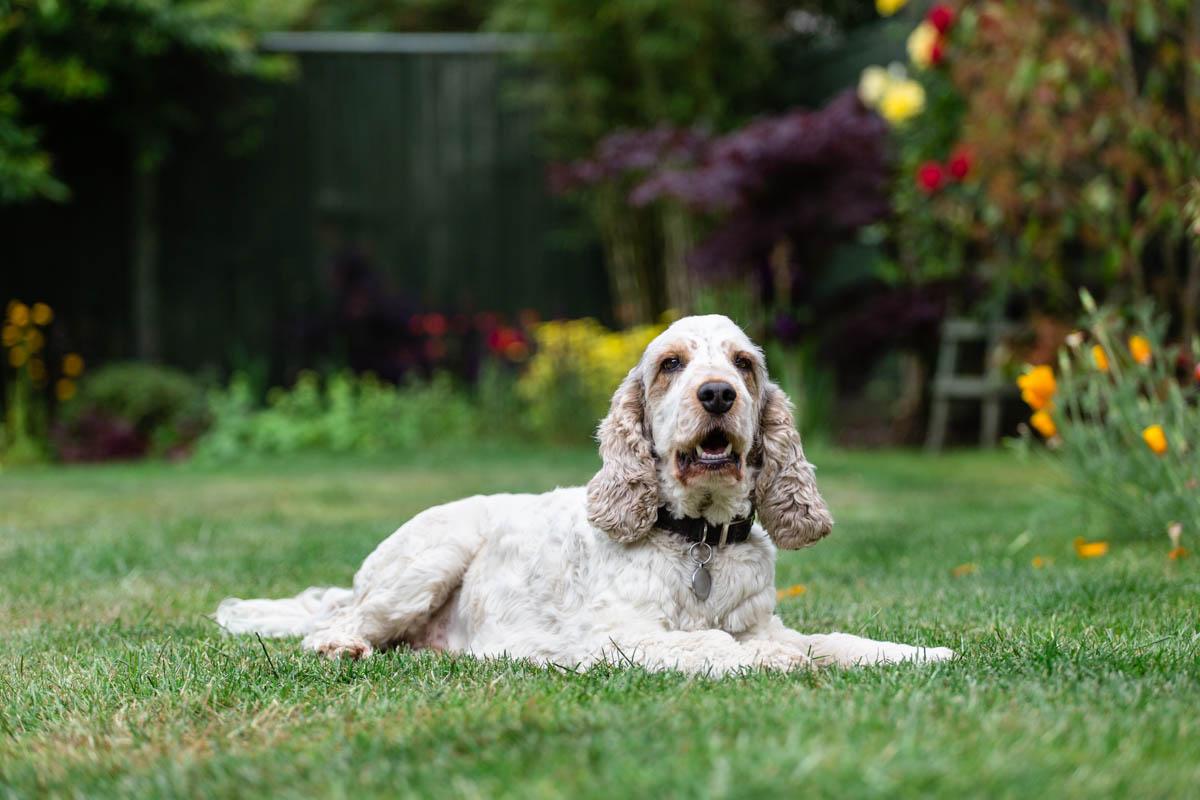 Dog Photography Sutton