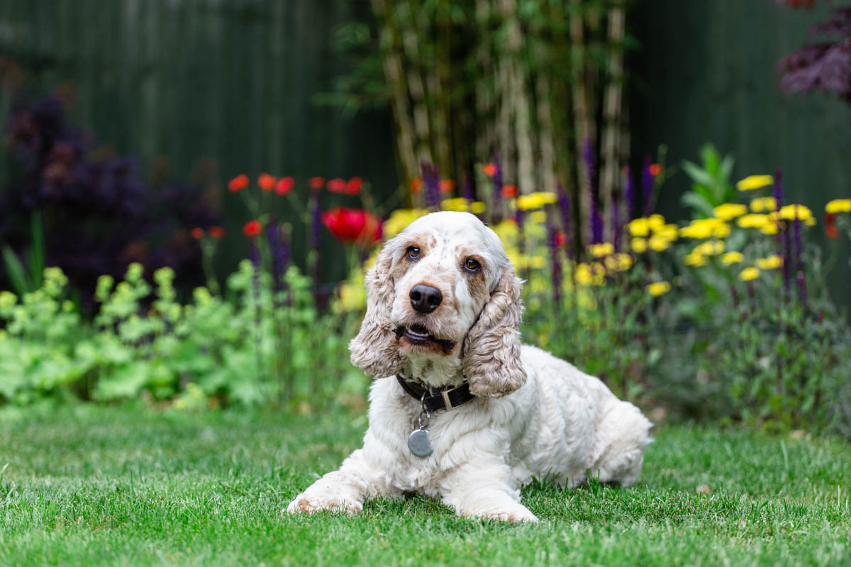 Dog Photographer London and Surrey