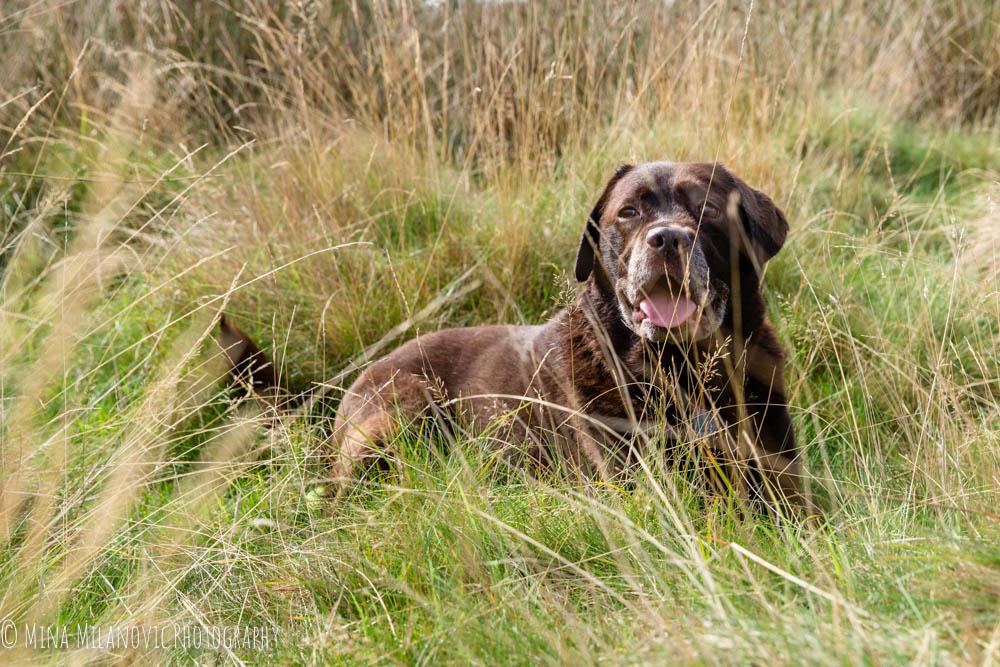 Mina Milanovic Dog Photography