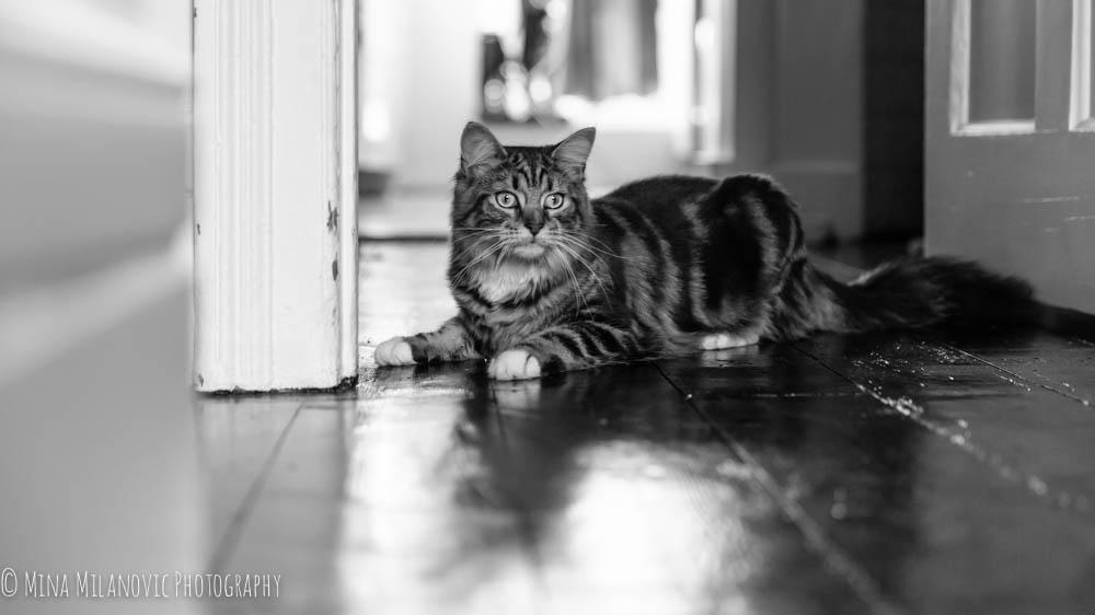 Mina Milanovic Cat Photography