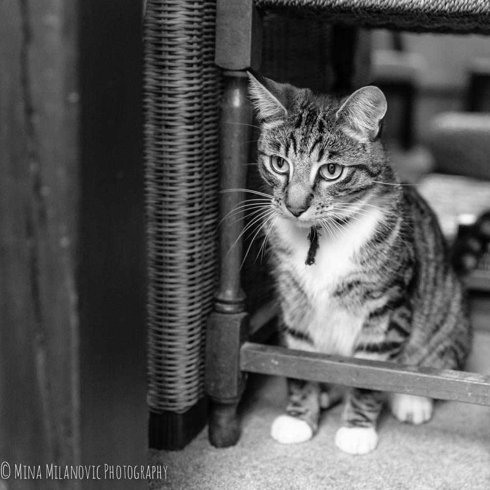 Mina Milanovic Cat Photography