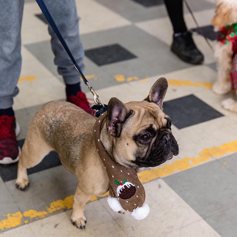 Reality Dog Training Christmas Class