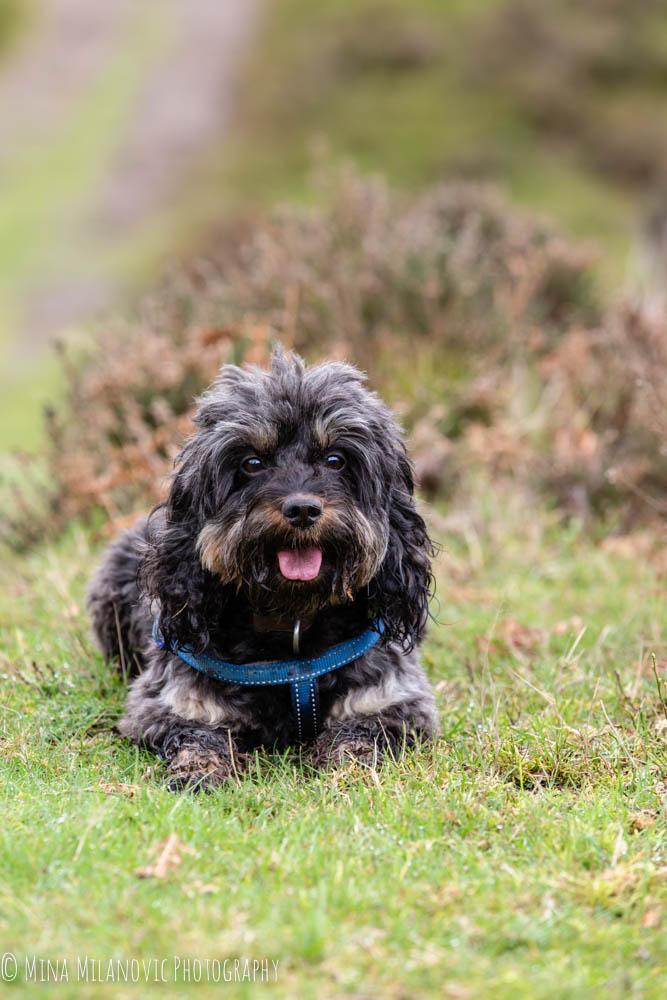 Surrey Hills Dog Photographer