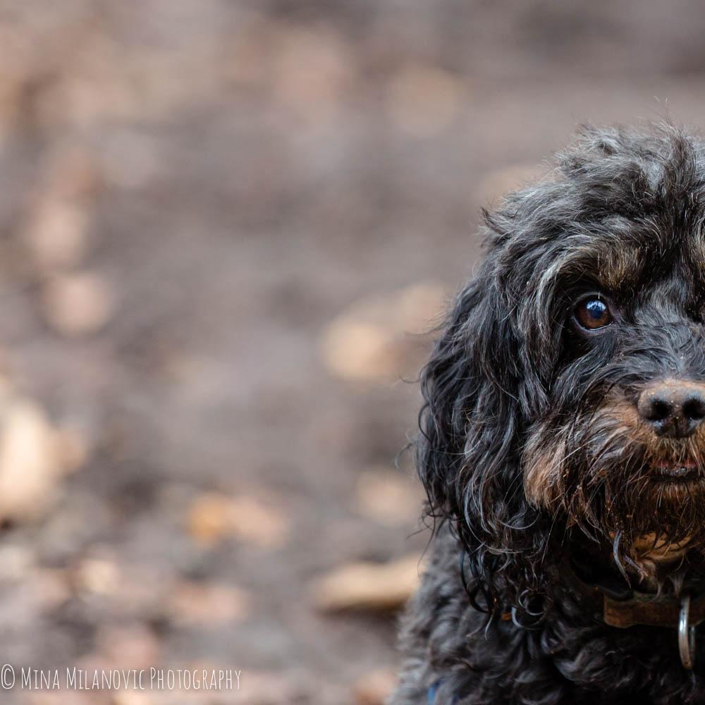 London Pet Photographer