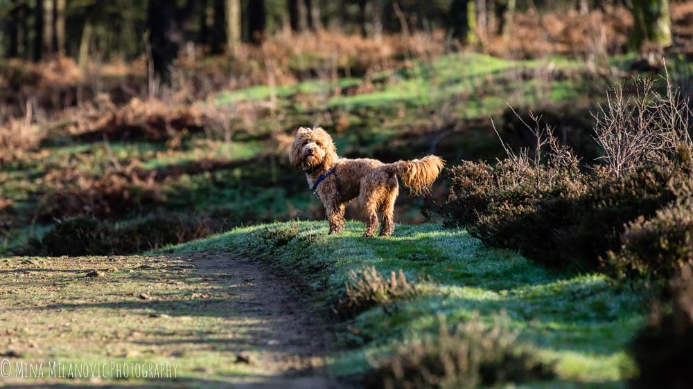 Surrey Pet Photographer