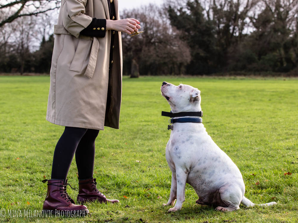 Mina Milanovic Pet Photography_Dog photographer Twickenham Richmond Surrey London