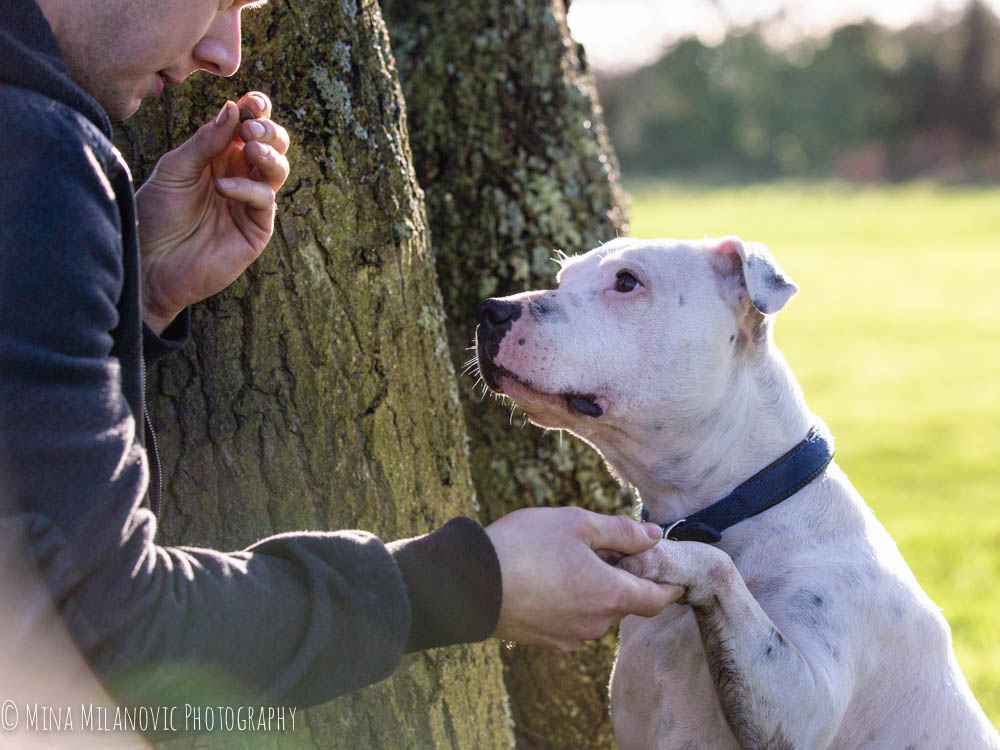 Mina Milanovic Pet Photography_Dog photographer Twickenham Richmond Surrey London
