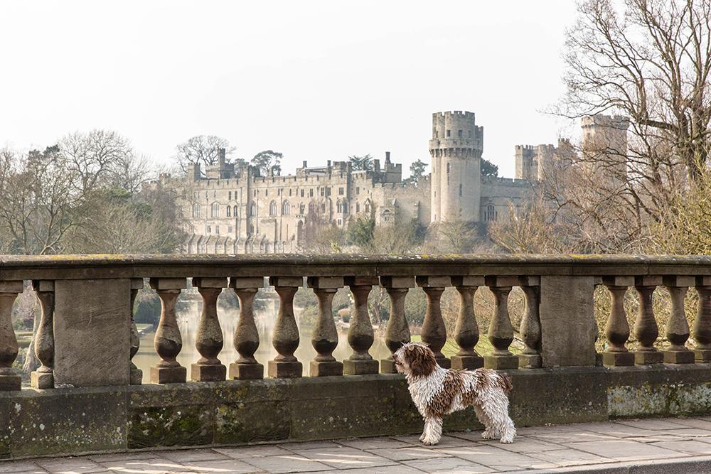 London Dog Photographer_Richmond and Surrey Dog Photographer