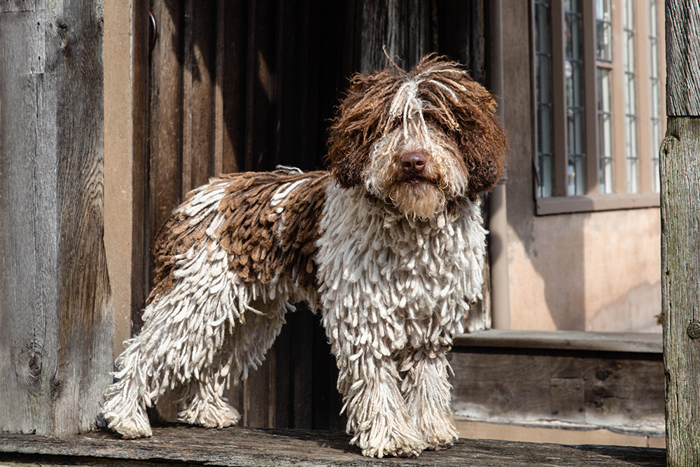 London Dog Photographer_Crufts Dog Photographer