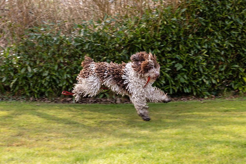 Crufts Dog Photographer_London Dog Photographer