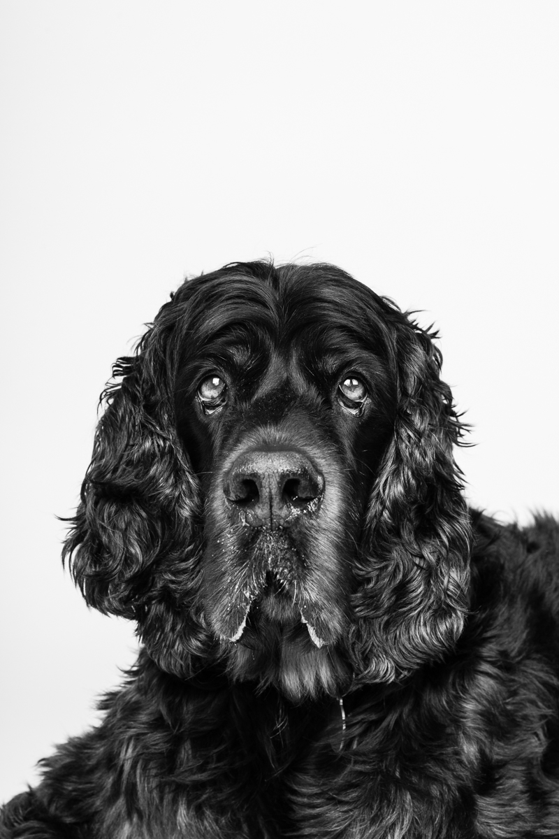 London Dog Photographer