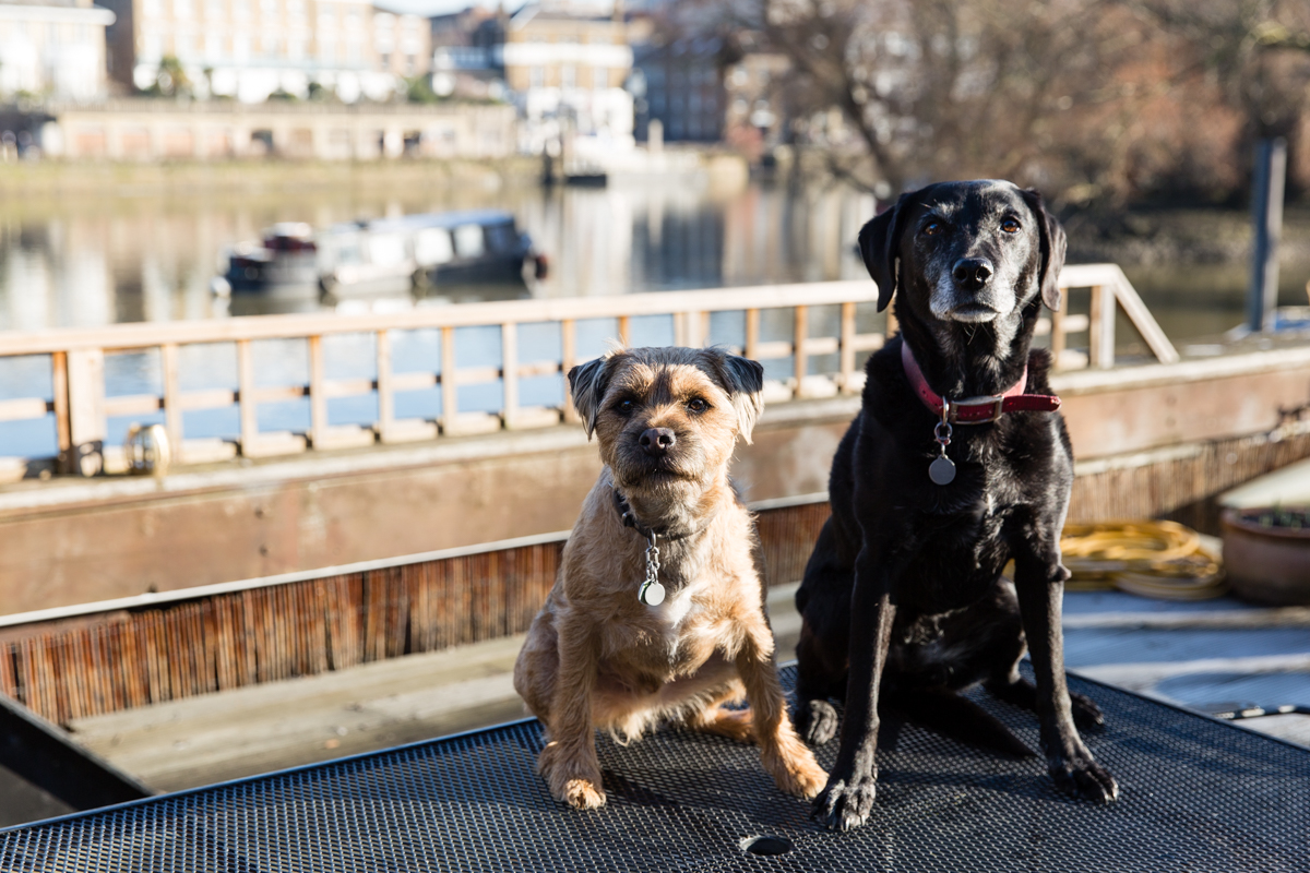 Richmond upon Thames dog photography_London dog photographer