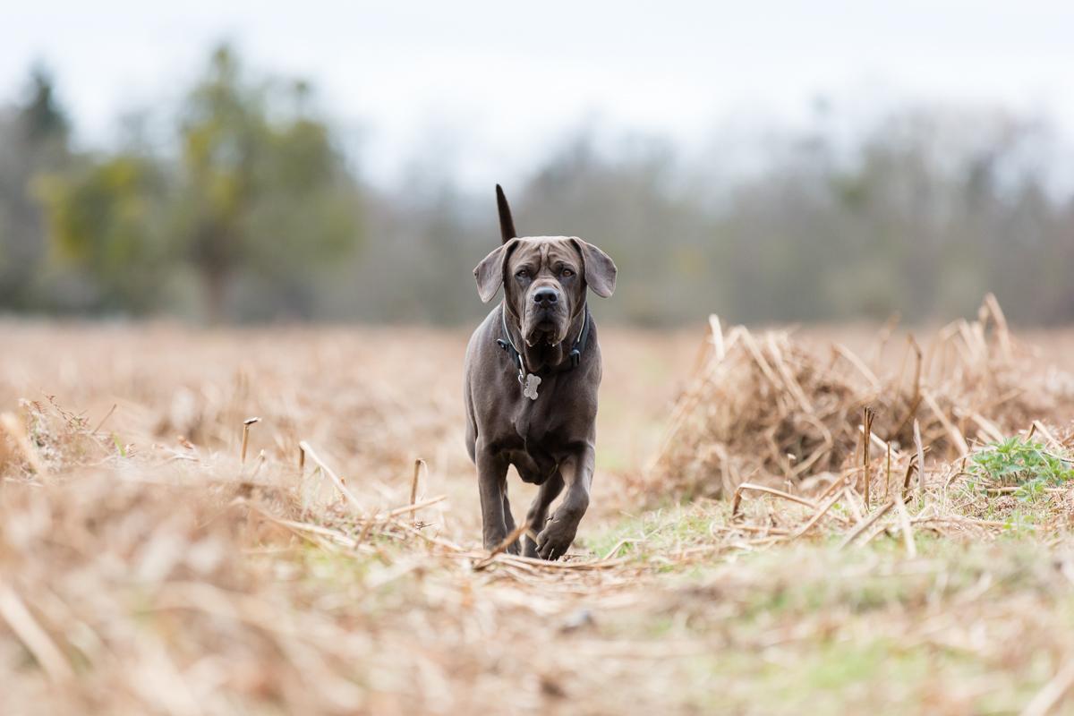 Richmond and Surrey Dog Photographer