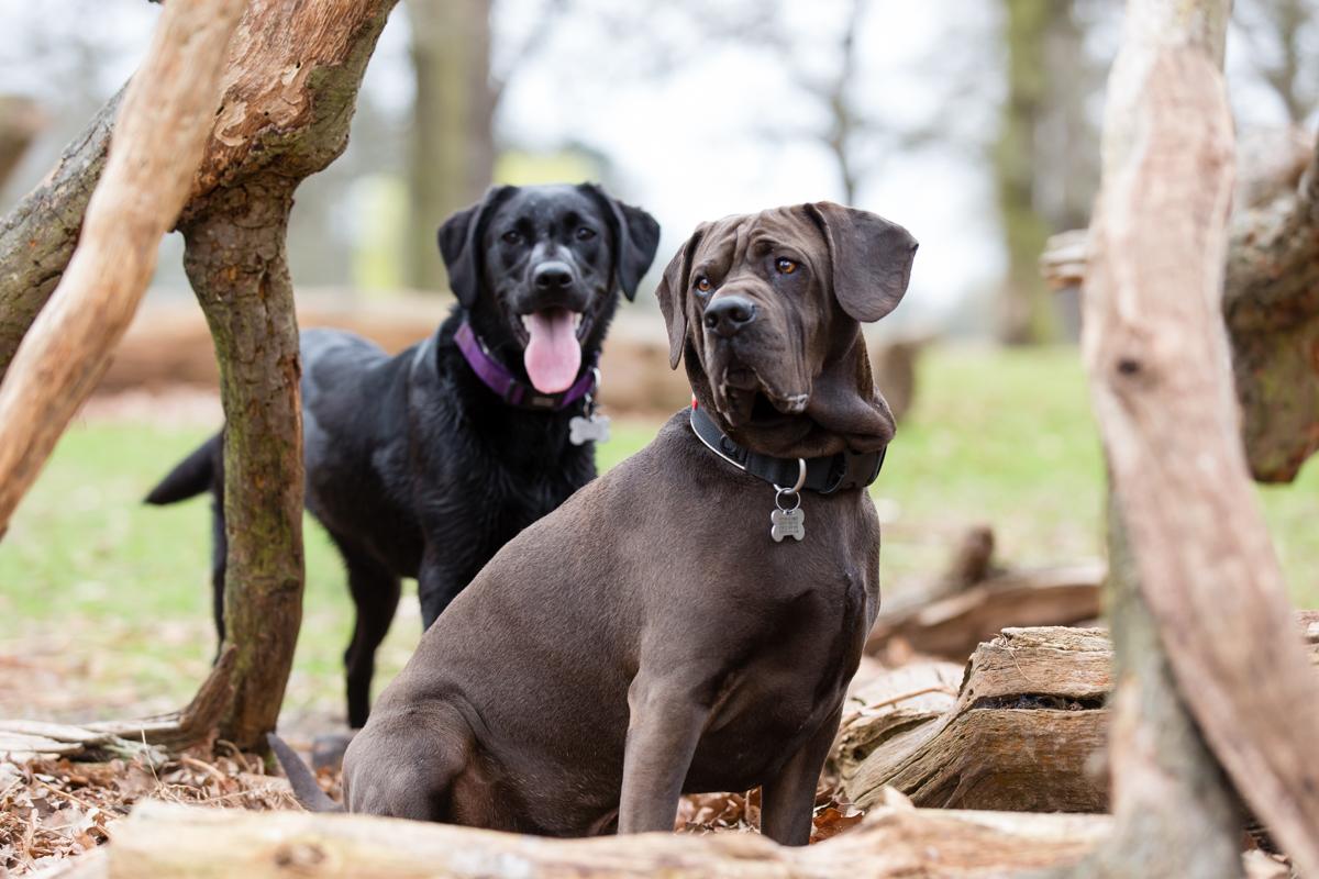 Richmond and Surrey Dog Photography