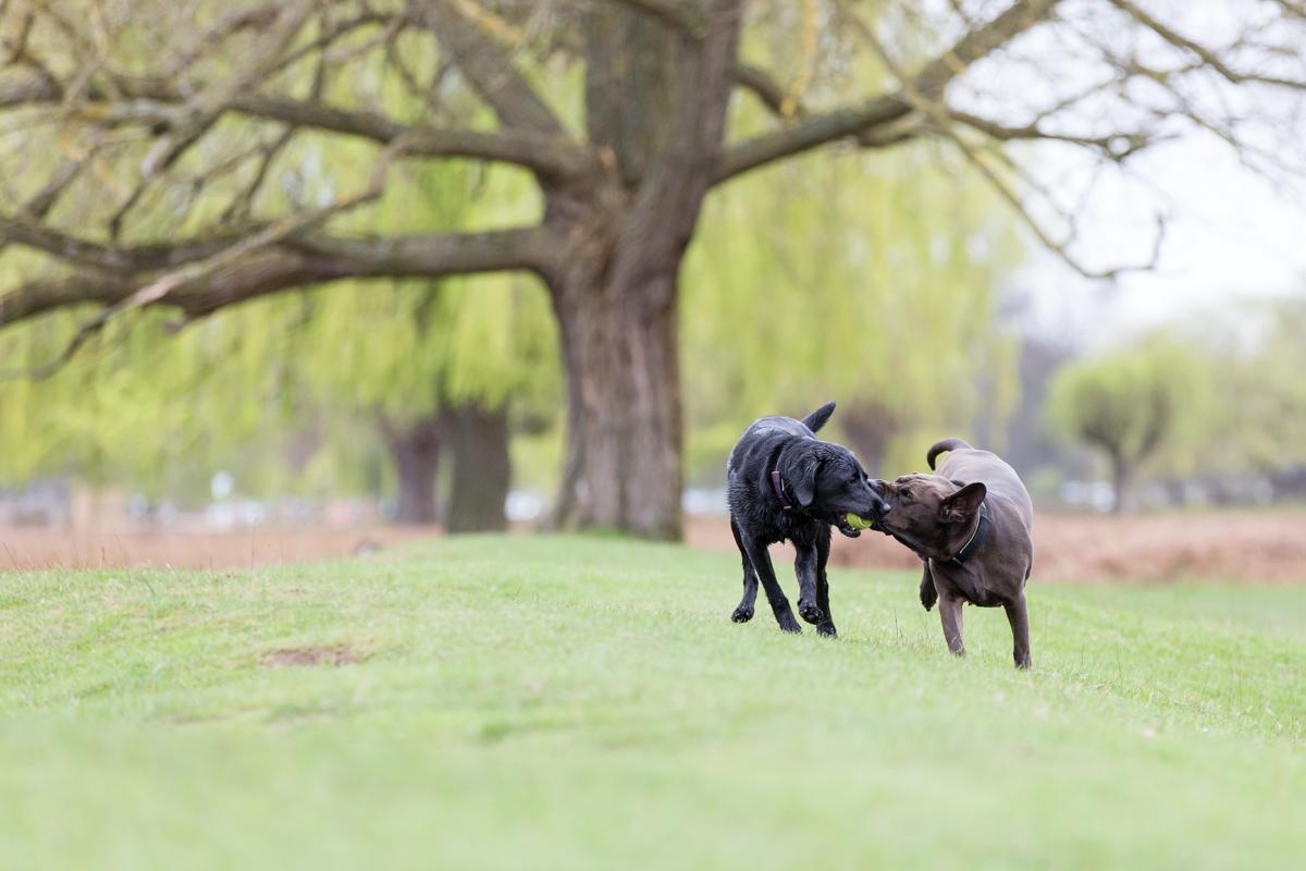 London and Surrey Dog Photographer