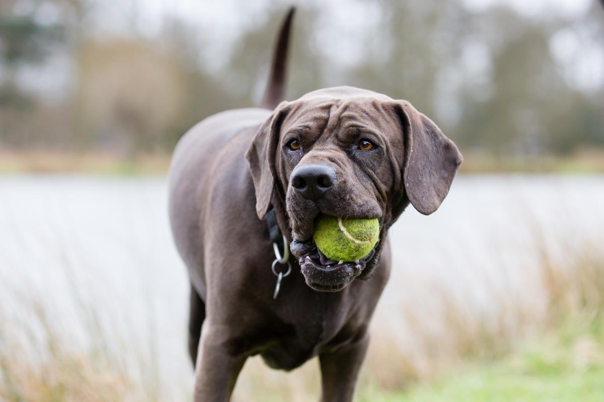 London Richmond and Surrey Dog Photographer