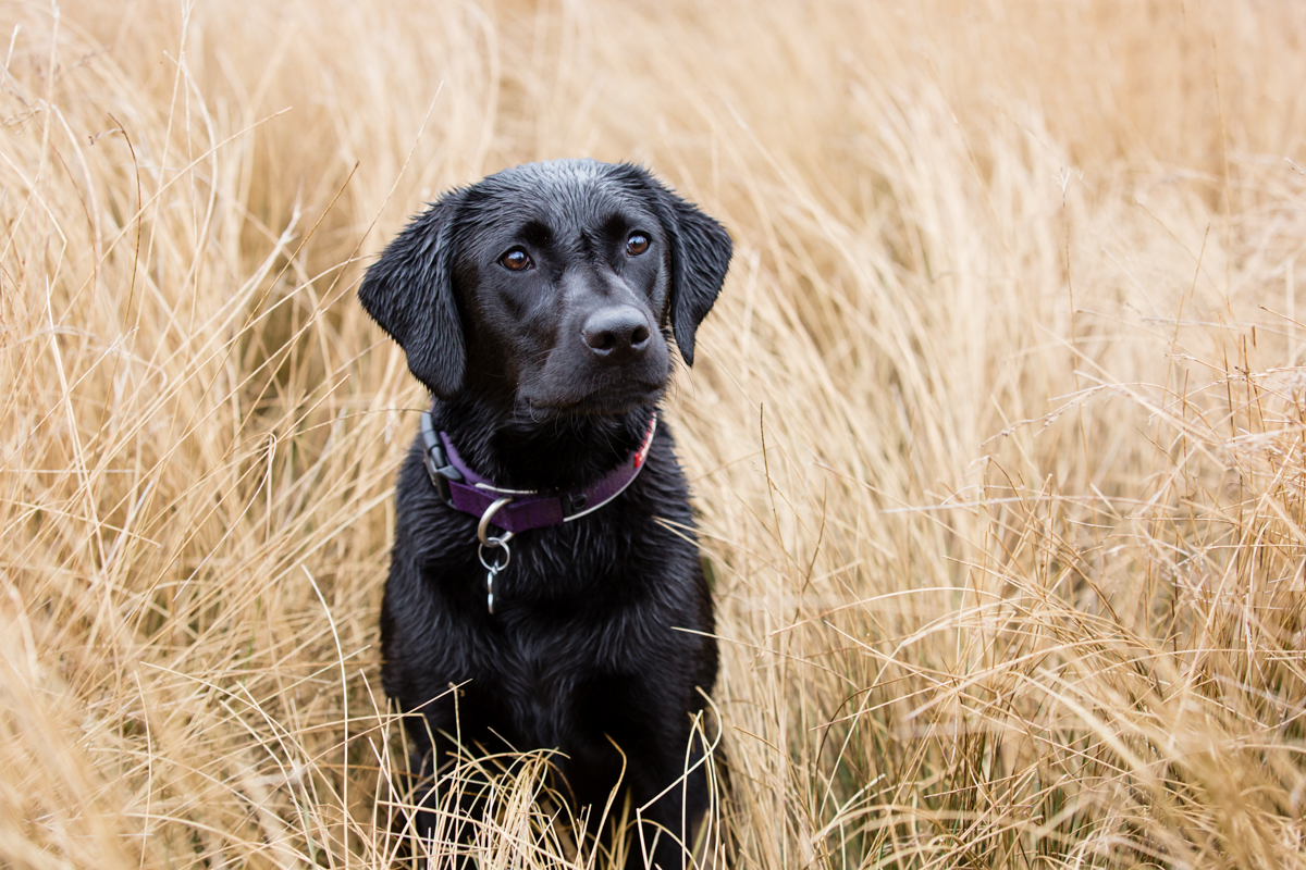 Richmond and London Dog Photographer