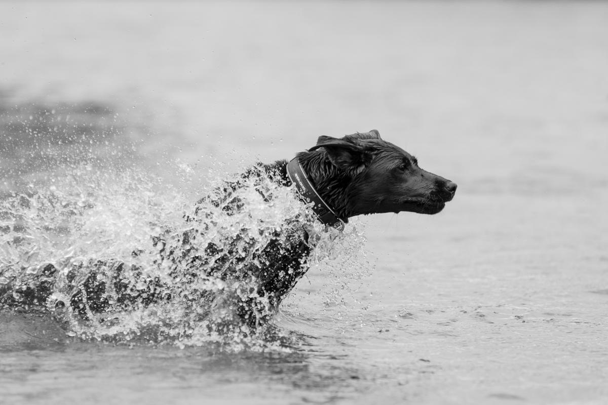 Hampton and London Dog Photographer