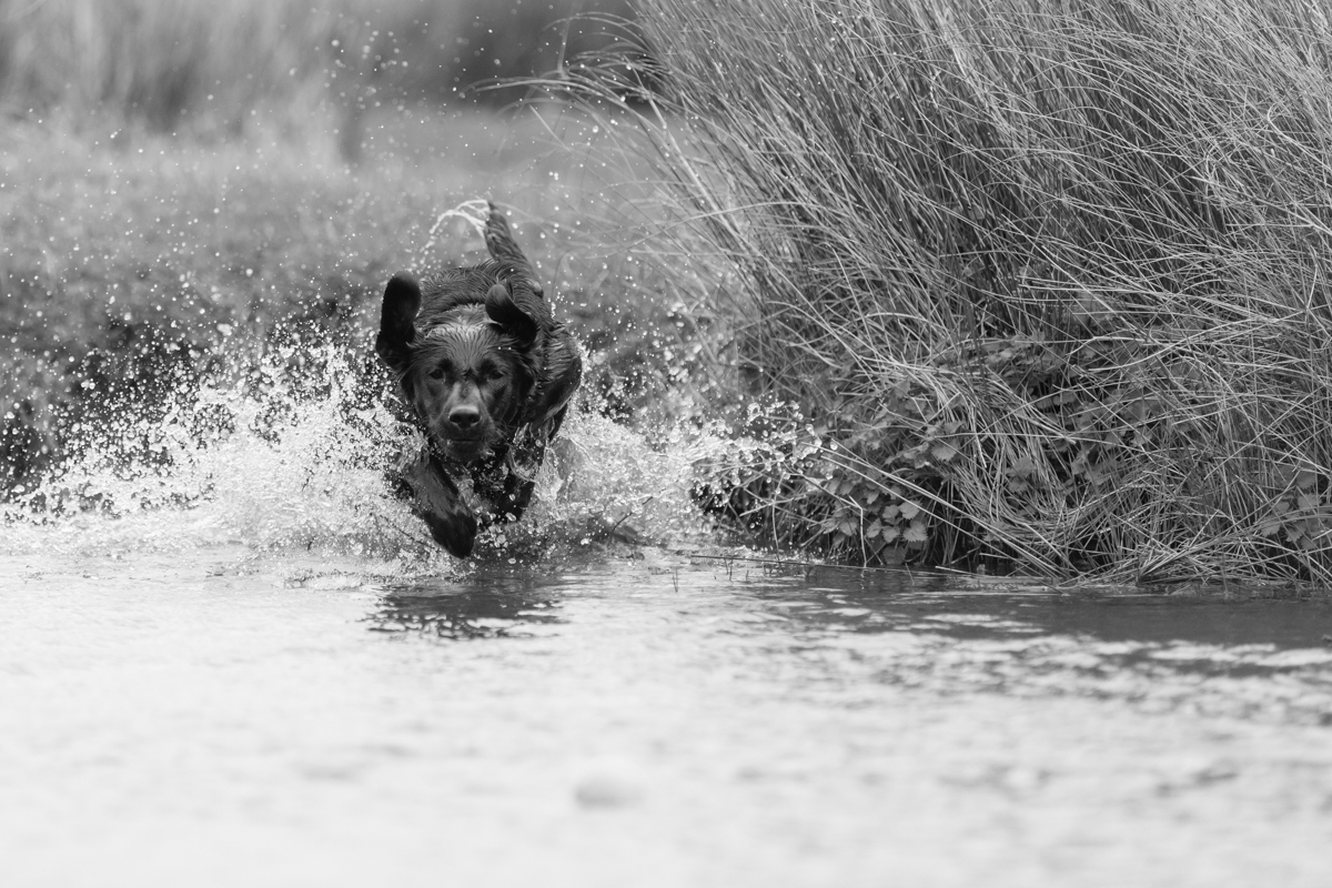 London Dog Photographer_South West London Pet Photography