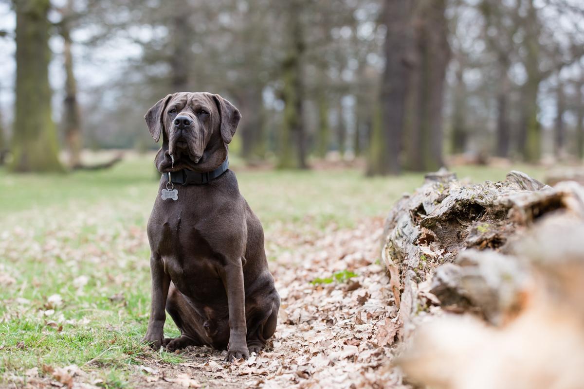 Richmond and Twickenham Dog Photographer_Twickenham Pet Photography