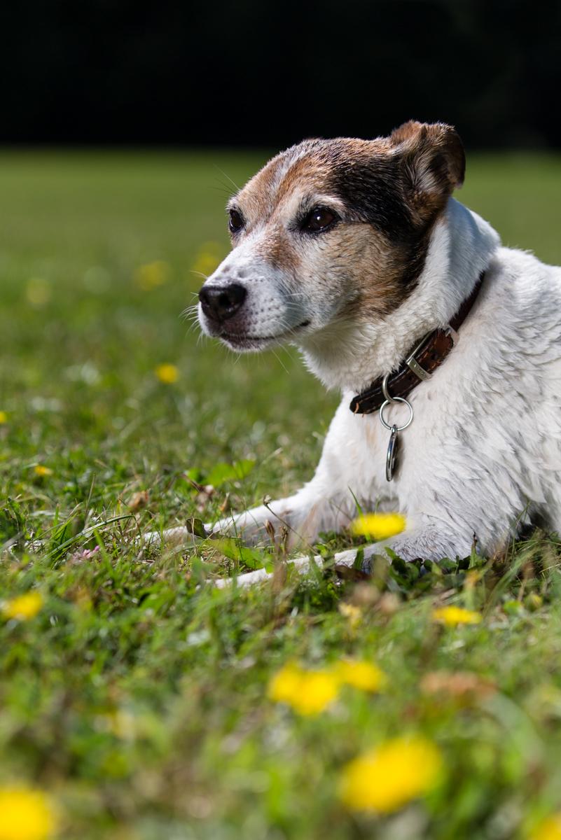 Twickenham dog photographer
