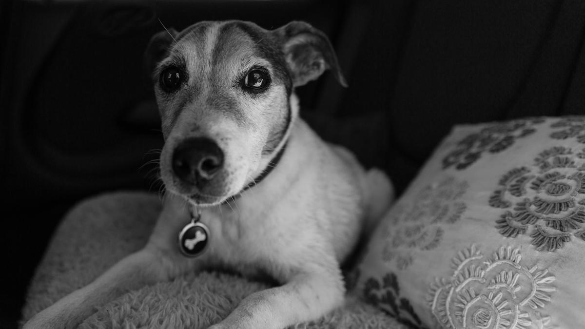 Richmond upon Thames and Surrey Dog Photographer
