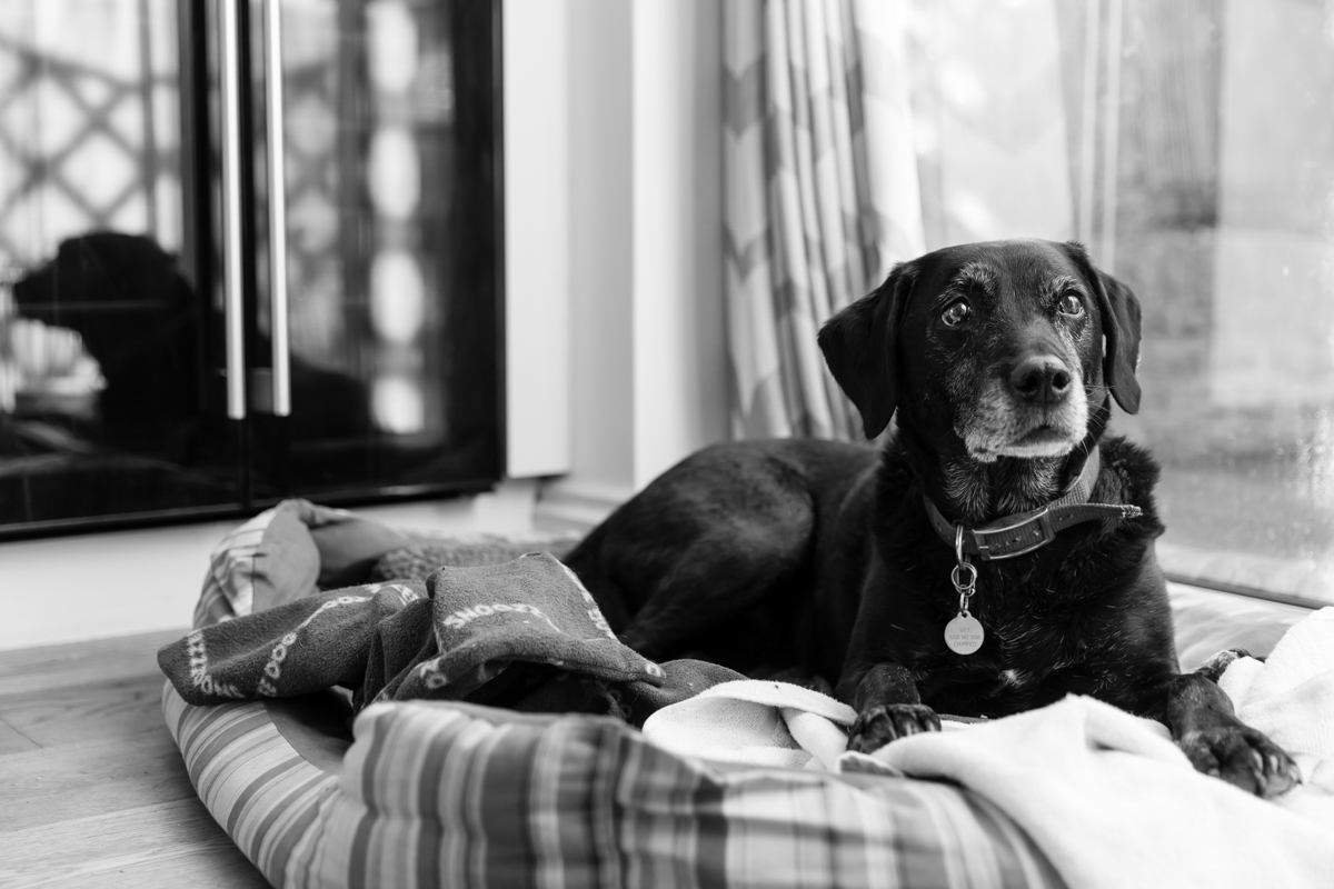 Richmond Dog Photographer
