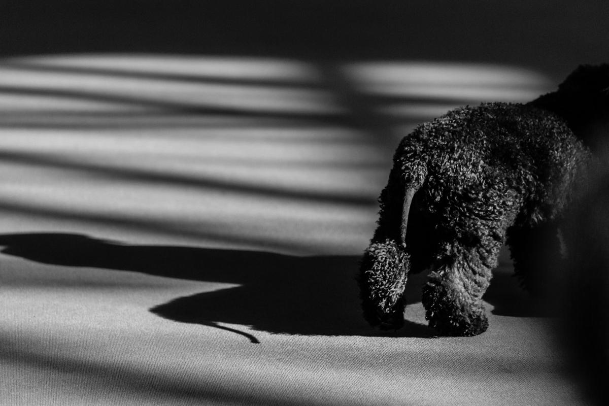 Crufts Dog Show Photography