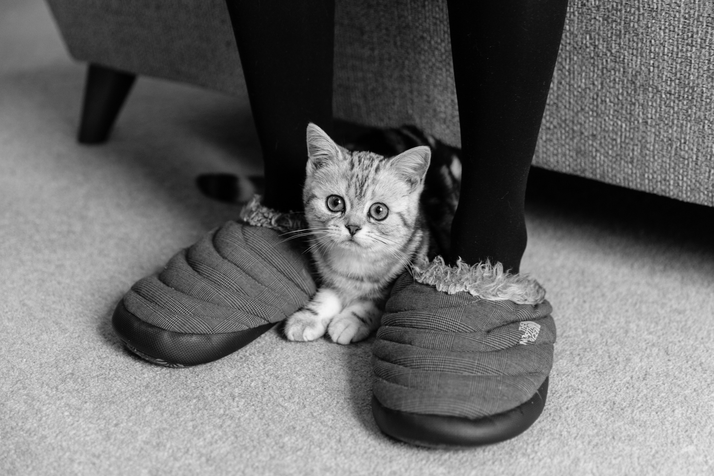 Professional Cat Photography London and Surrey