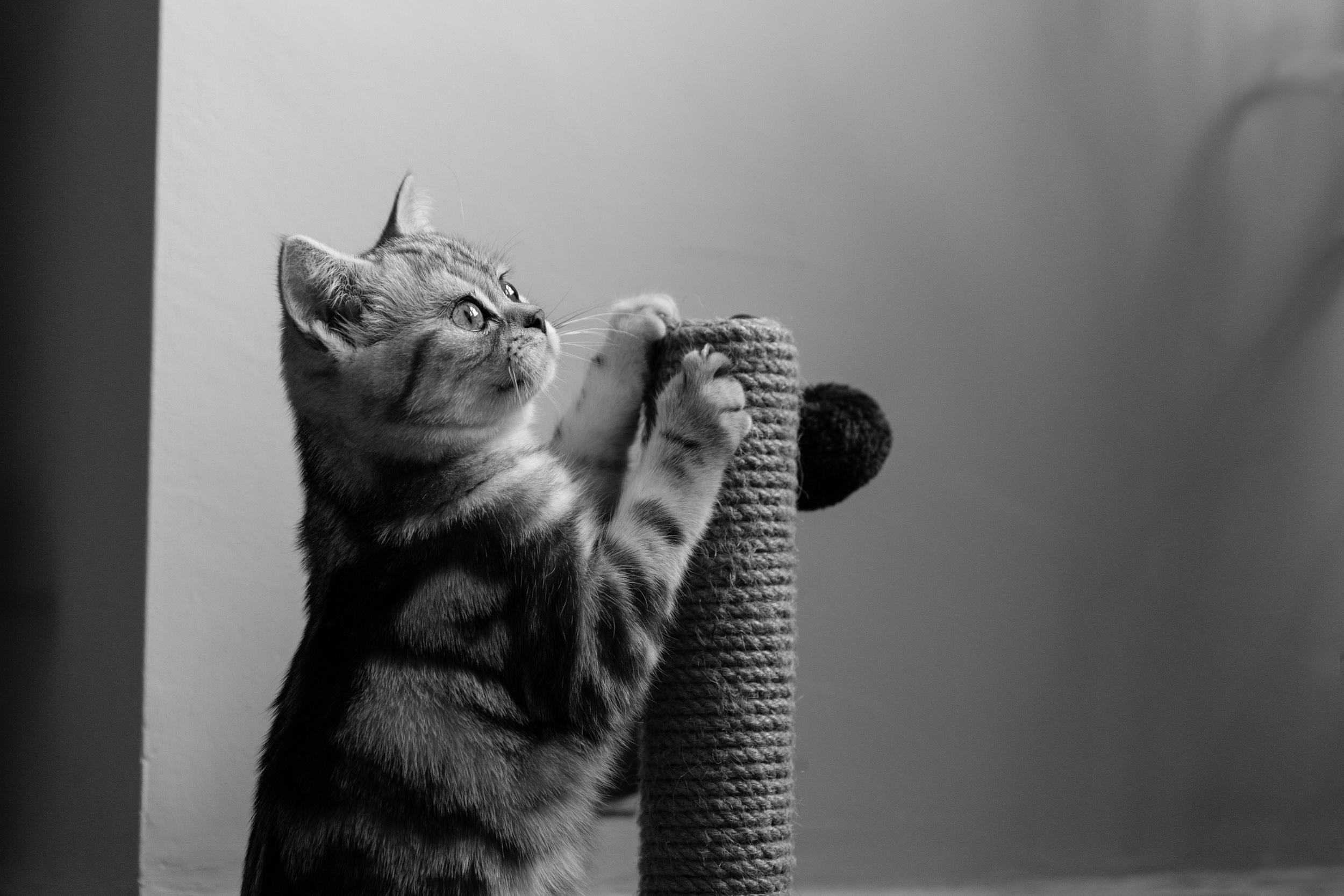 Surrey Cat Photographer