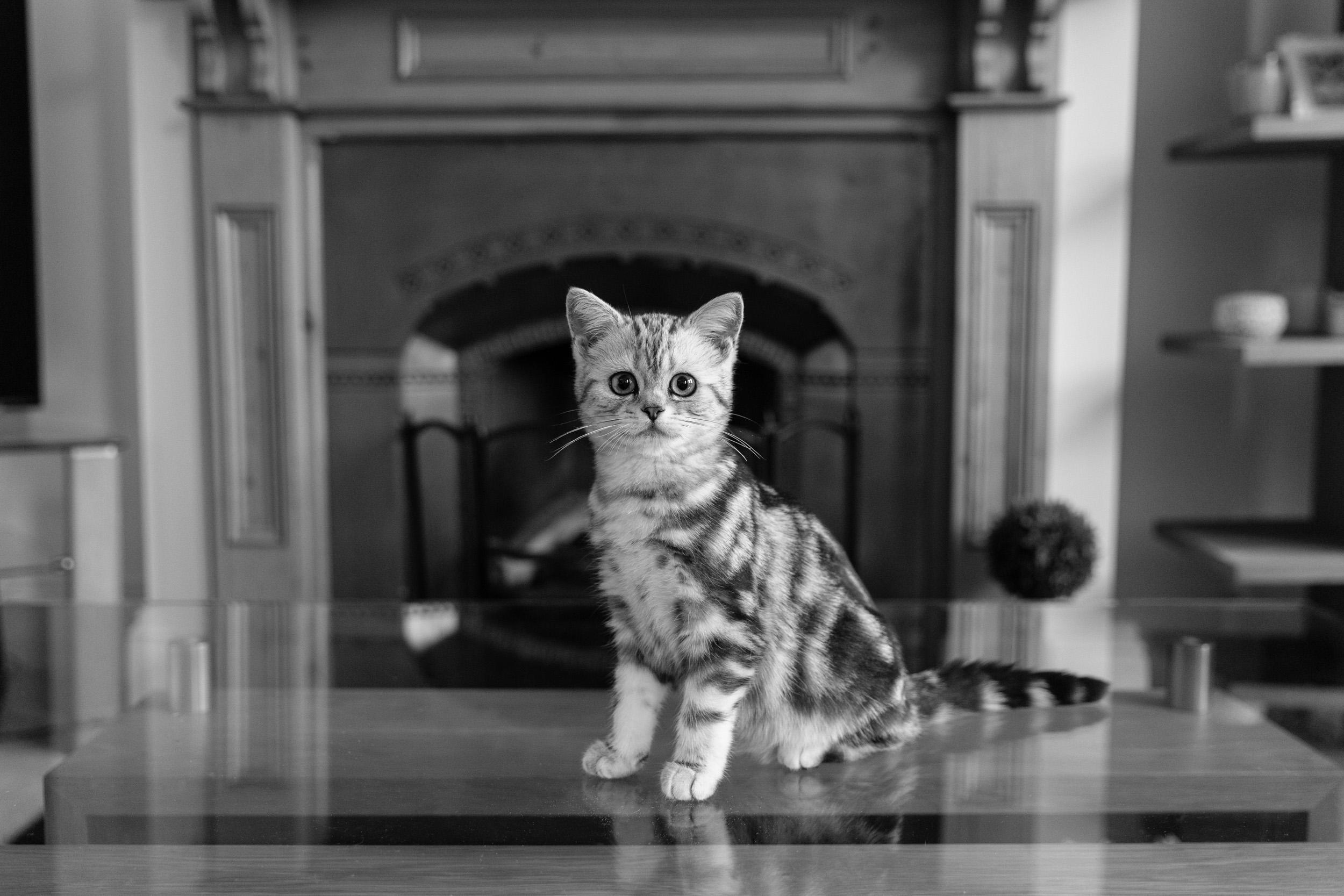Richmond cat photographer