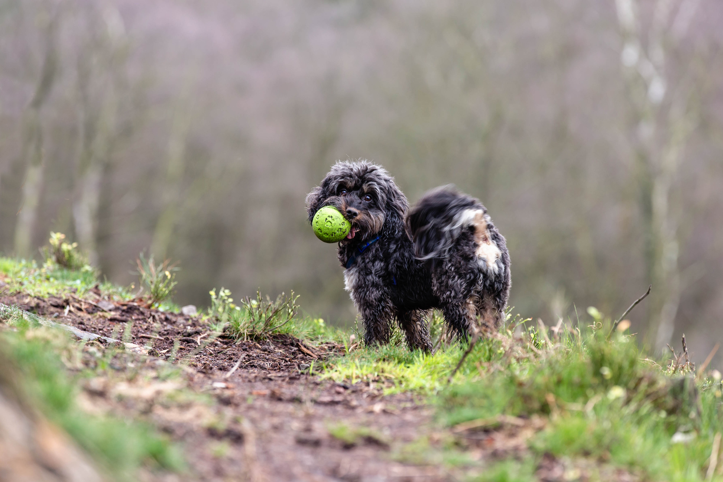 Surrey Hills Dog Photographer