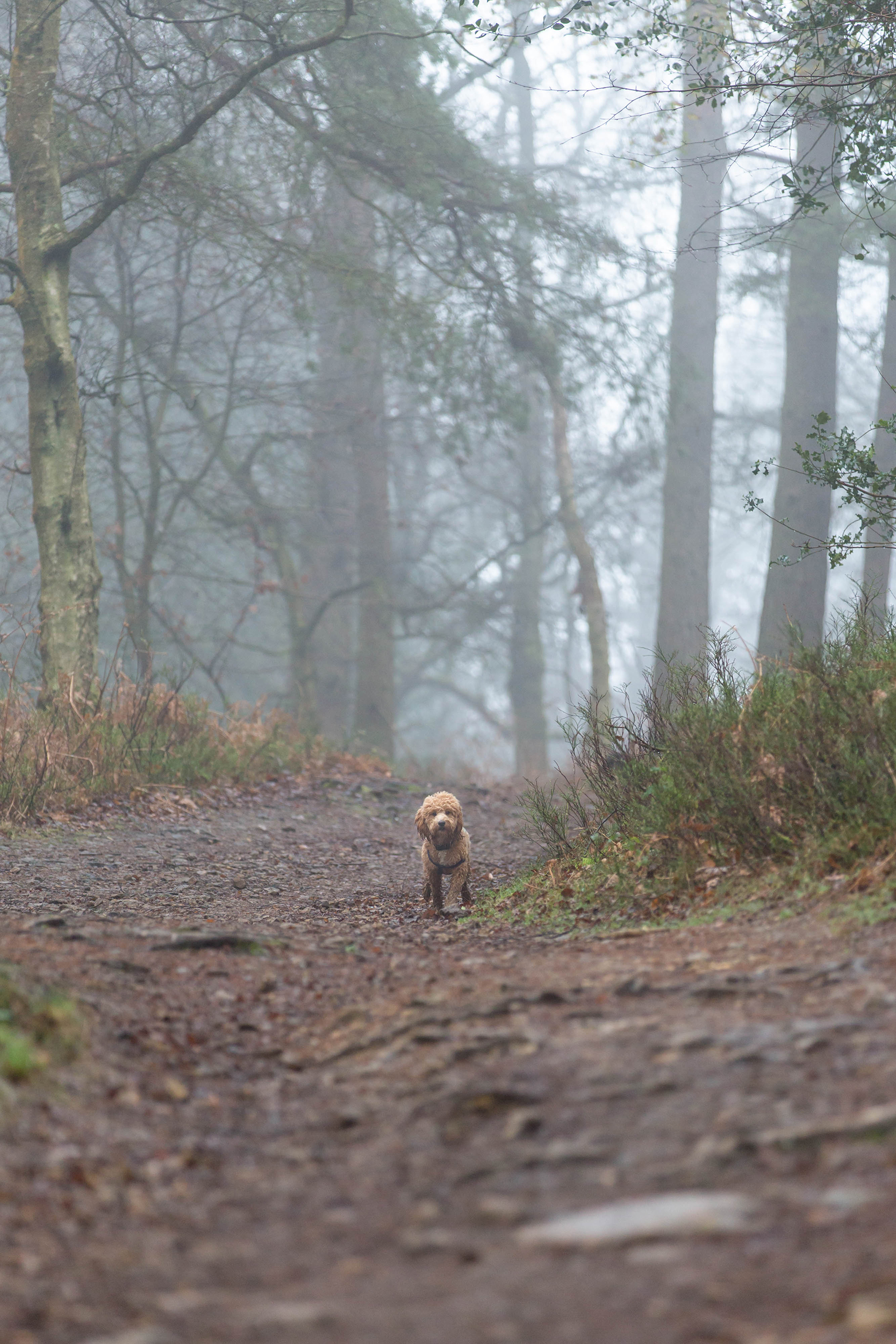 Location dog photography Surrey