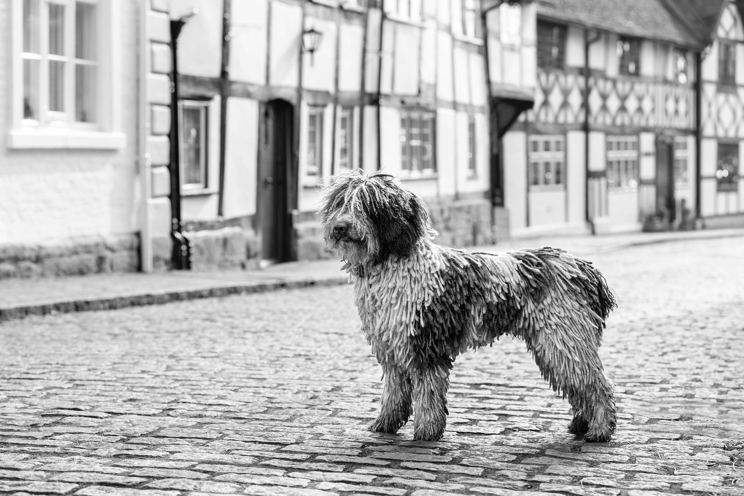 Dog show photographer Crufts