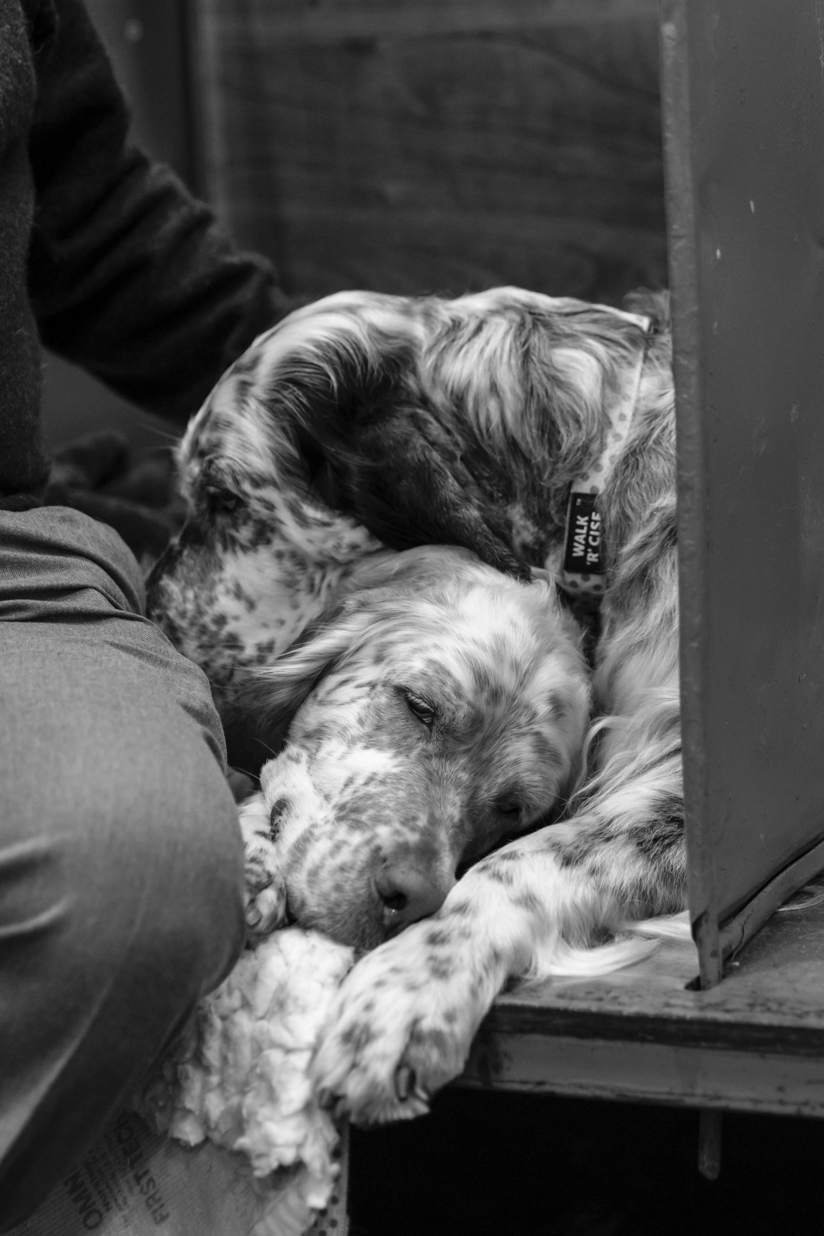 Surrey Pet Photographer at Crufts