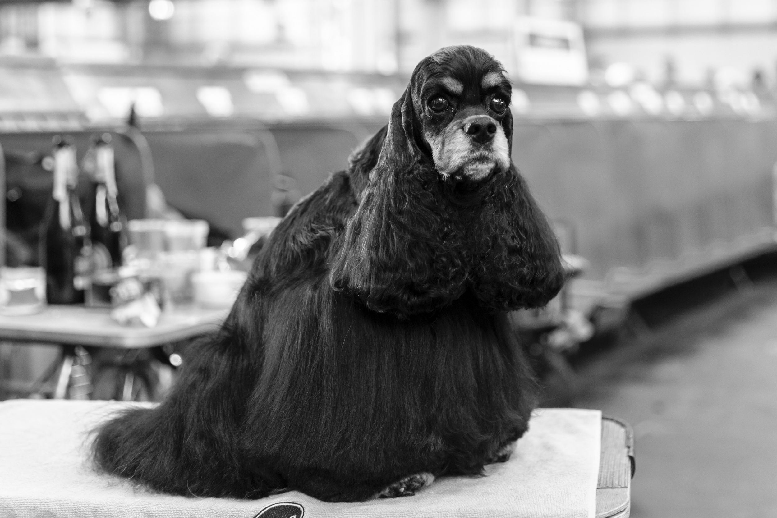 London Dog Photographer at Crufts