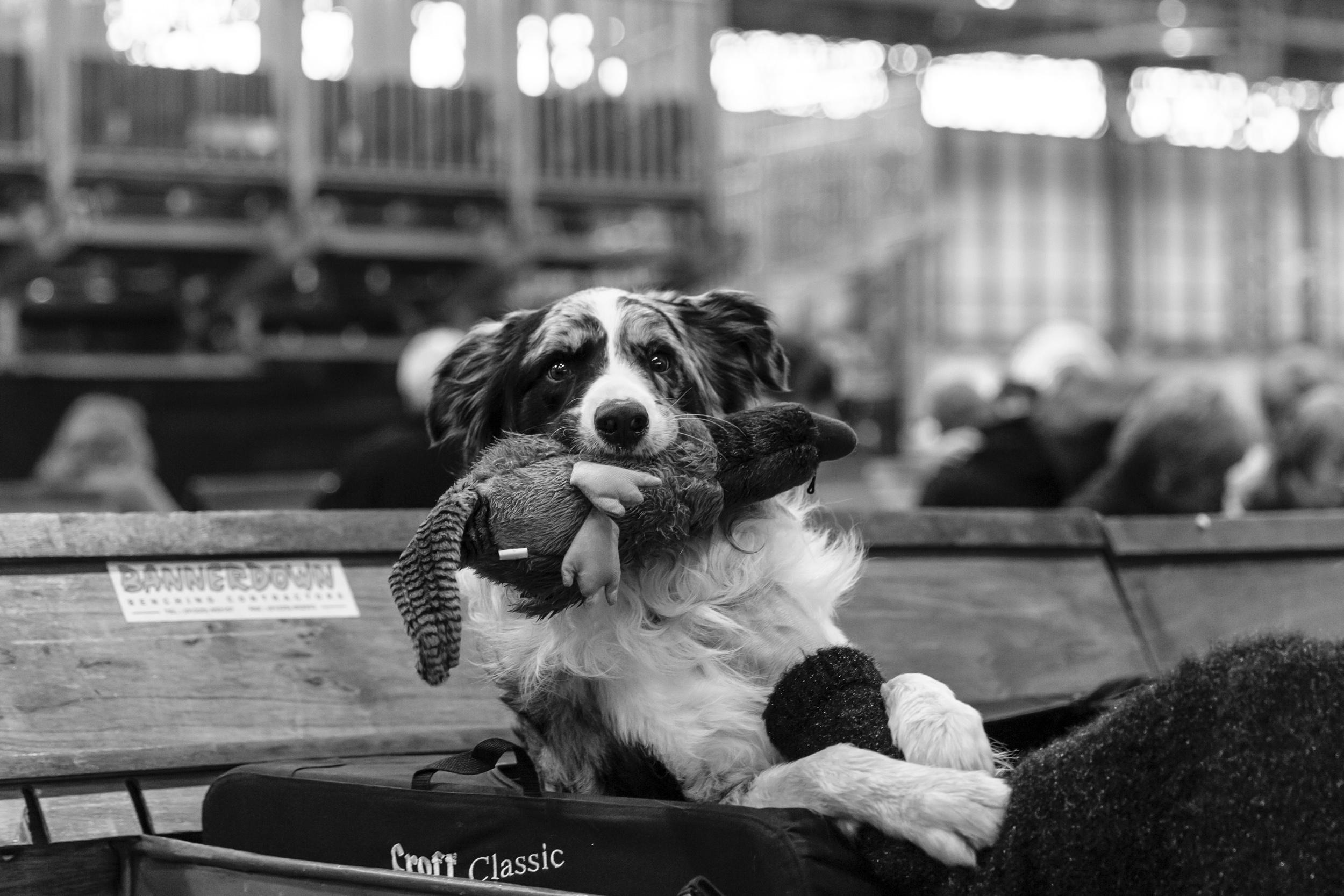 London Pet Photographer at Crufts