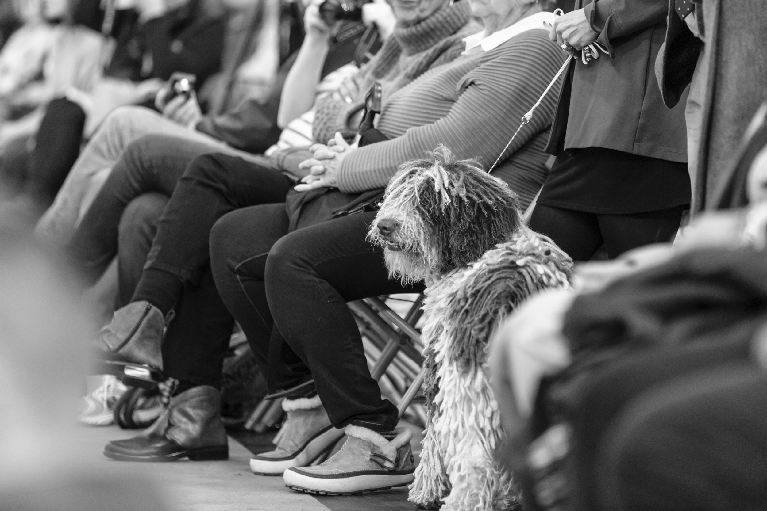 Dog Show Photographer Crufts Birmingham