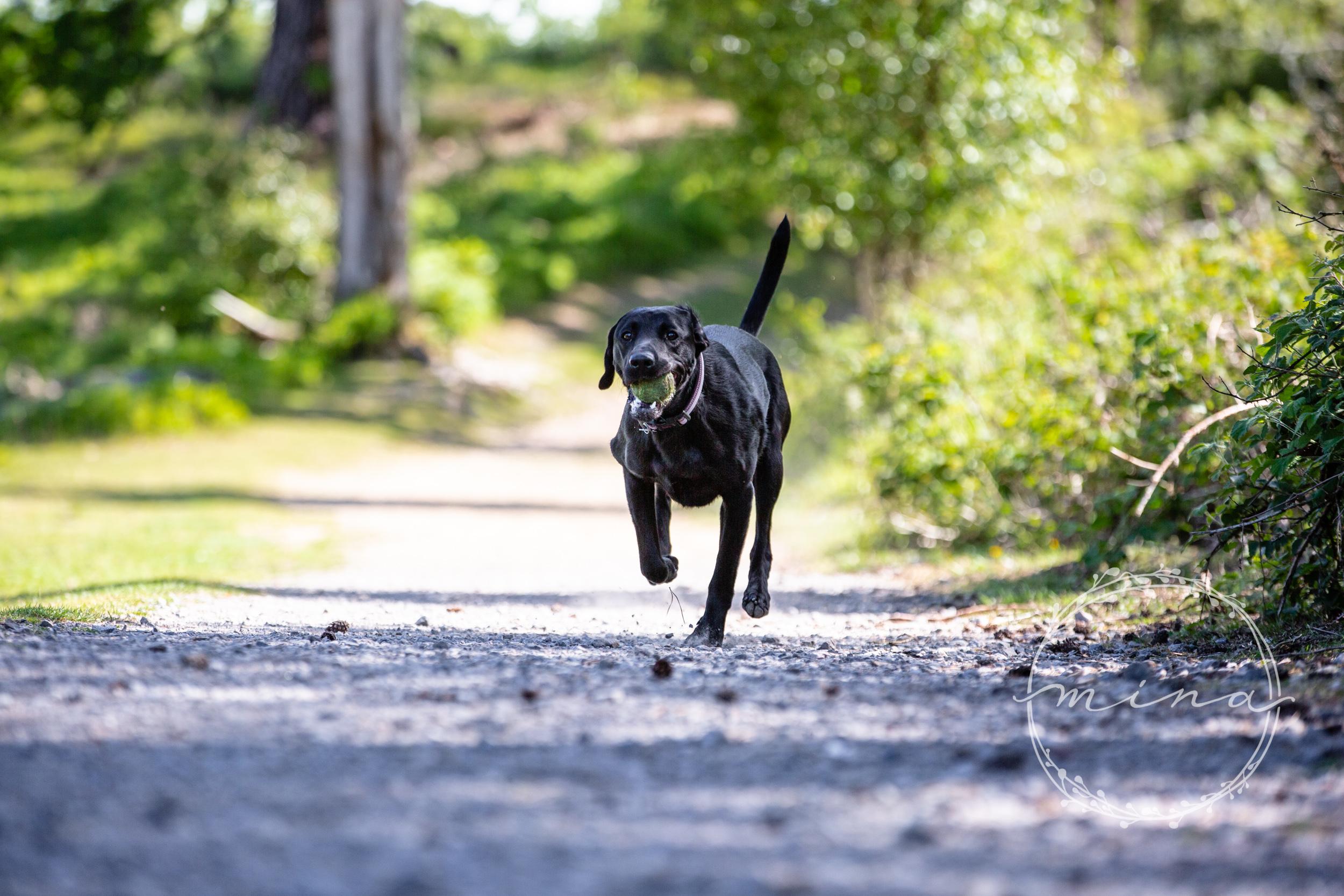 Surrey Pet Photography