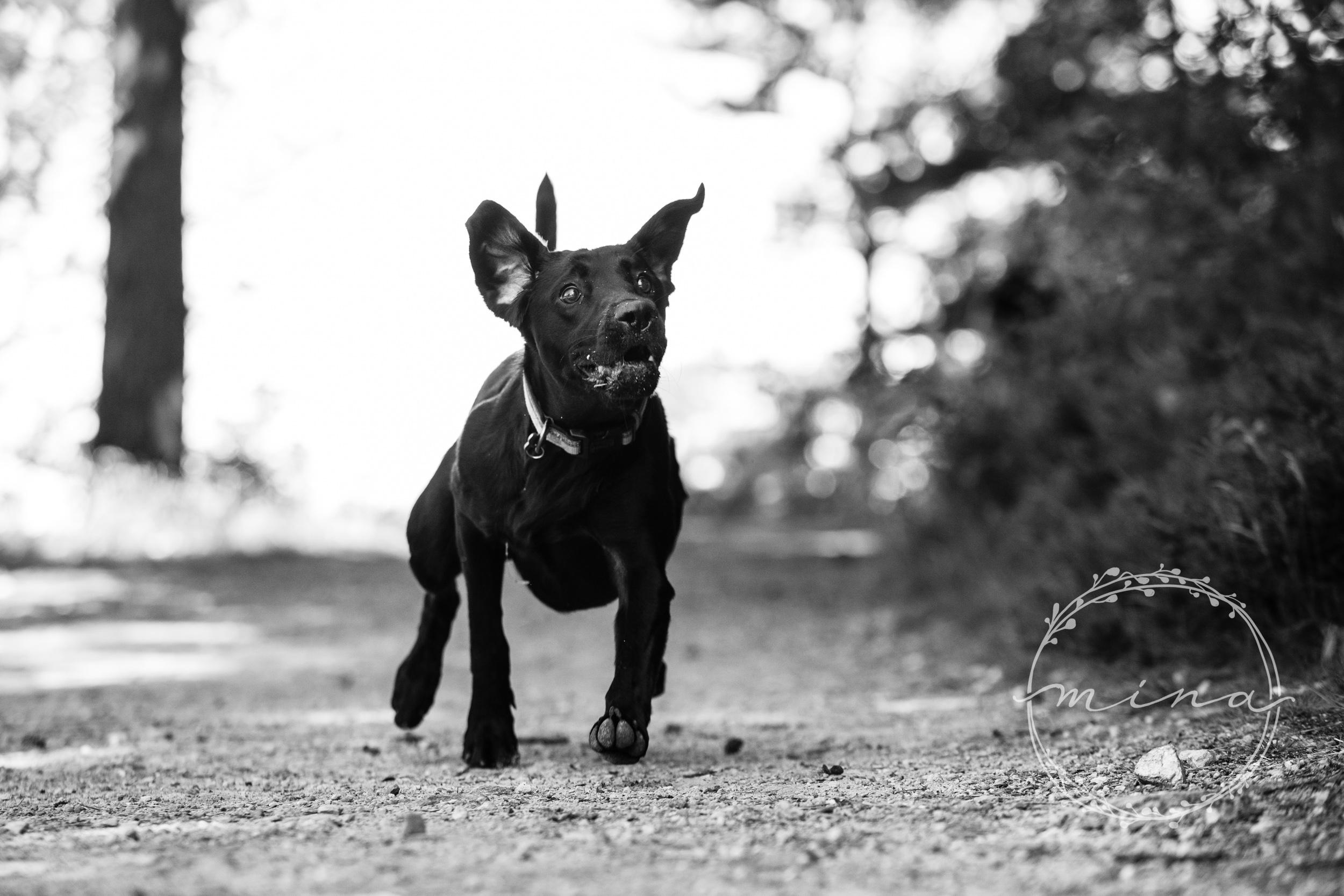 London Pet Photography