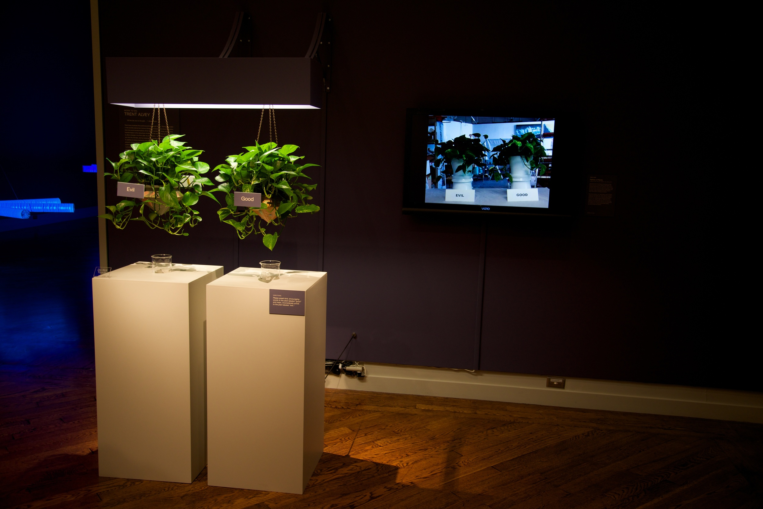 Pathos of Plants: Two Pothos Plants labeled 'Good' and 'Evil' are photographed every hour. The images are compiled into a time lapse video over the four month exhibit period. Positive and negative reinforcement is encouraged.
