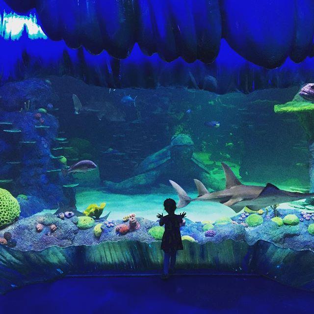 The other day at the aquarium... #sydneyaquarium