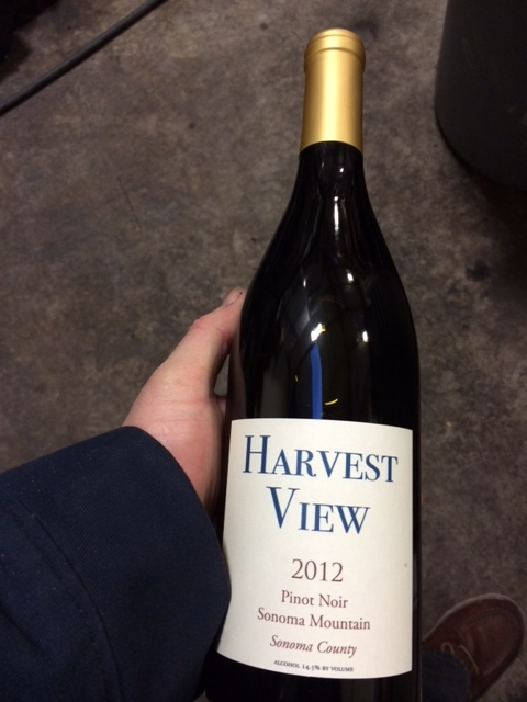 2012 harvest view pinot noir at the winery.jpg